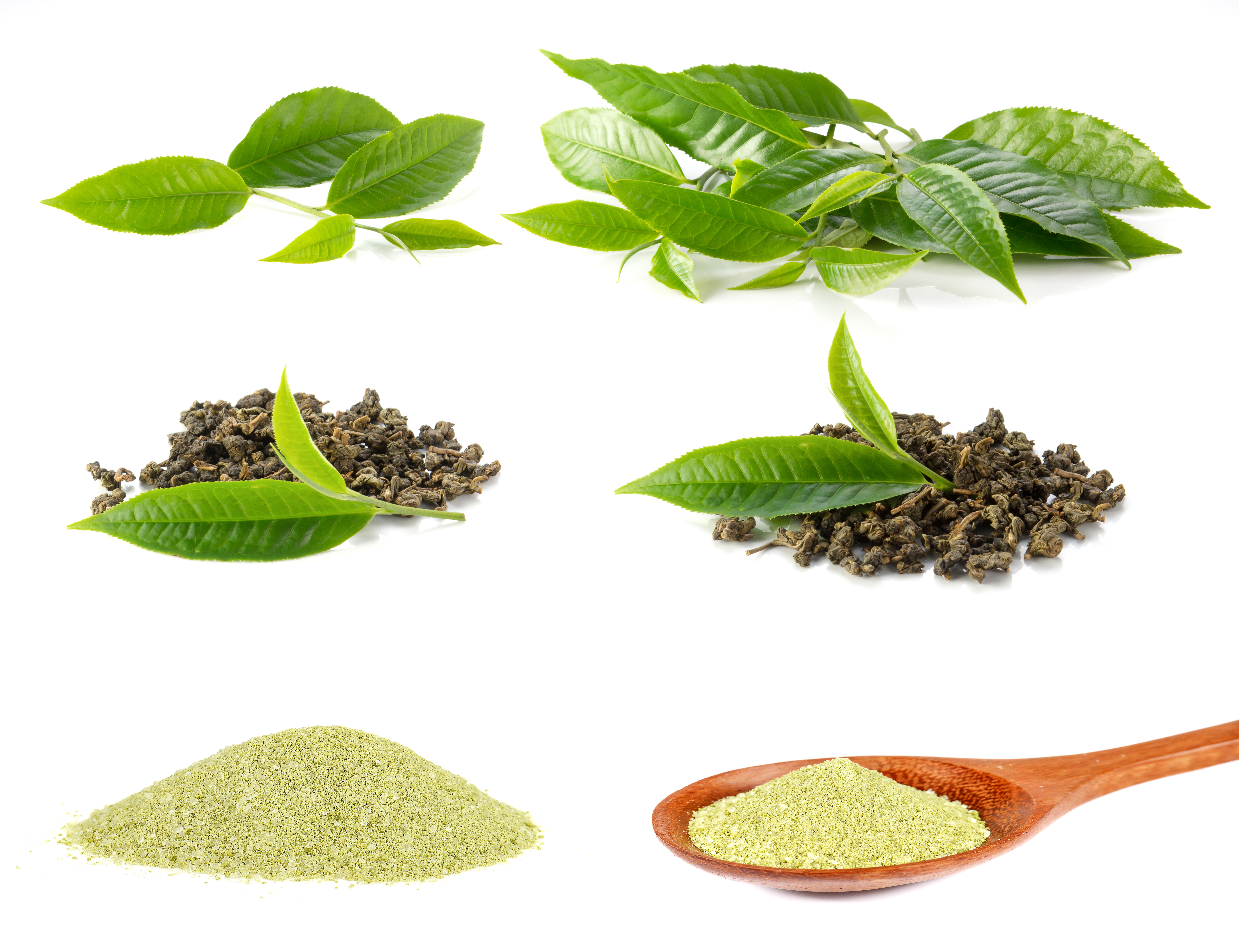 Studien über Matcha Tee